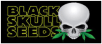 Black Skull Cannabis Seeds - Official Authorised Distributors List - Just Feminized